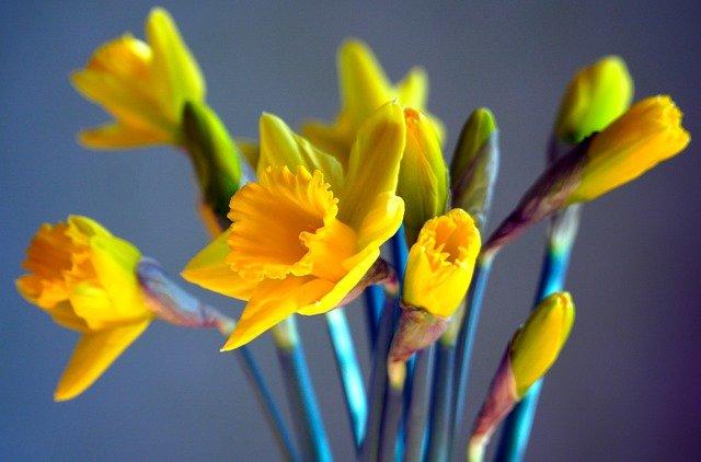 Flowers Blossom Bloom Yellow  - matthiasboeckel / Pixabay