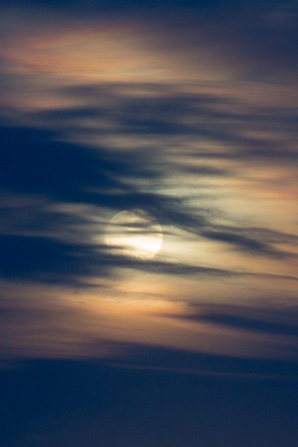 IMG_9506Blue Moon